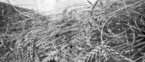 www.alberidimaggio.com